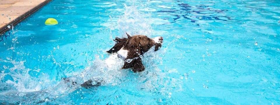 Galeria Dondersteen Resort Foto 6 - Perro en la piscina