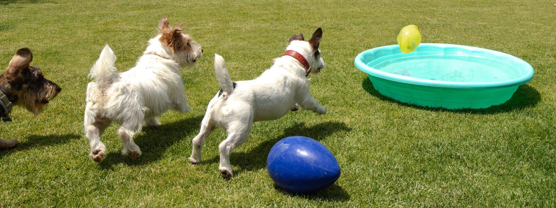 Galeria Dondersteen Resort Foto 4 - Perros jugando en el parque