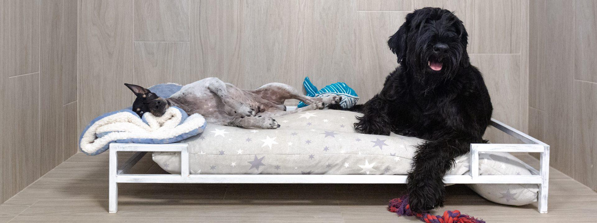 Galeria Dondersteen Resort Foto 3 - Perros relajados en la cama